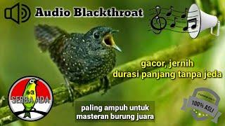 Masteran paling ampuh Kicau burung Blackthroat gacor jernih durasi panjang tanpa jeda #blackthroat