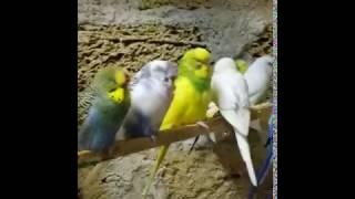 Феодосия продажа попугаев