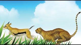 Doğal seçilim bir evrim mekanizması mıdır?