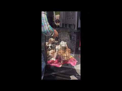Puppy farm mothers rescued