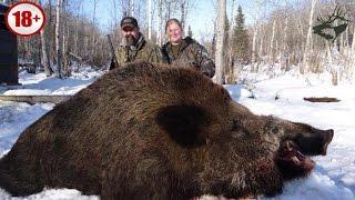 Охота на кабана/ CАМЫЕ БОЛЬШИЕ ДИКИЕ КАБАНЫ. ТОP-15 ОГРОМНЫХ ТРОФЕЕВ. Wild boar hunting/