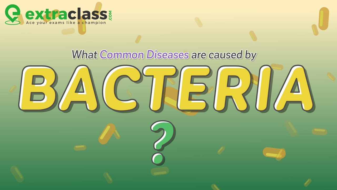 What common diseases are caused by bacteria | Biology | Extraclass.com