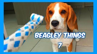 "Funny ""beagley"" Things! Why You Should Get A Beagle Dog. Episode #7"
