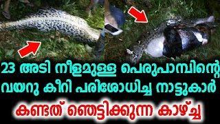 23 അടി നീളമുള്ള പെരുപാമ്പിന്റെ വയറു കീറി പരിശോധിച്ച നാട്ടുകാർ കണ്ട കാഴ്ച്ച   malayalam latest news !