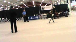 Stoli CDX and Top Scoring Dog at BRT Nationals