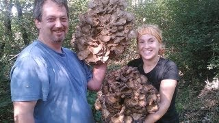 The Mikeology Store on the Hunt for Grifola frondosa and Entoloma arbortivum