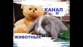 Трейлер канала о животных