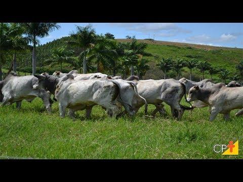 Clique e veja o vídeo Curso Como Aumentar a Rentabilidade na Pecuária de Corte CPT