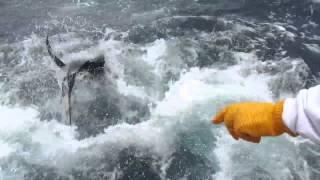 Marina Pez Vela - 2013 Offshore World Championship