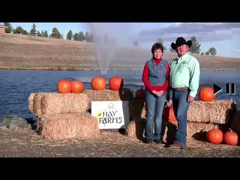 Denver Area October Harvest Fest Pumpkin Patch and Corn Maze