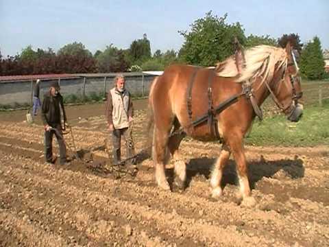 Dialer et butter les pommes de terre mod youtube - Butter pomme de terre ...
