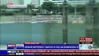 Hewan Misterius Muncul di Kolam Bundaran HI Jakarta