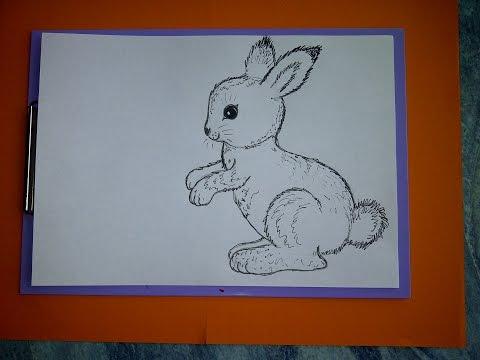 Как рисовать заяц