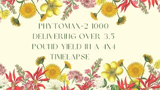 PhytoMAX-2 1000 Delivering Over 3.5 Pound Yield in a 4X4