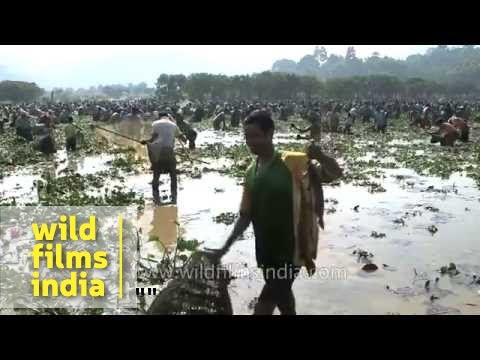 Community Fishing in Assam or Wetland Plunder?