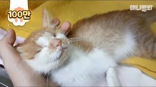 두 눈이 없지만 가진 게 더 많은 고양이 '기적이'ㅣ The Reason Behind This Blind Cat's Happiness Is..?
