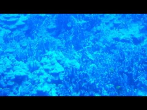 Atlantis Submarine trip in Kona