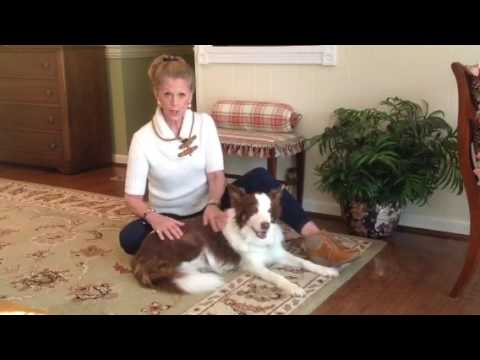 216 Energy healing - Healing animals veterinary reiki veterinary technician, w Brent Atwater