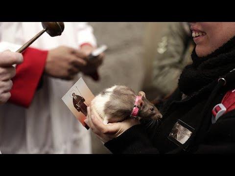 شاهد: مباركة الحيوانات في الفاتيكان خلال الاحتفال بعيد القديس أنتوني…