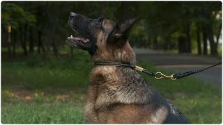 Leather Choke Collar For German Shepherd Everyday Walking And Training