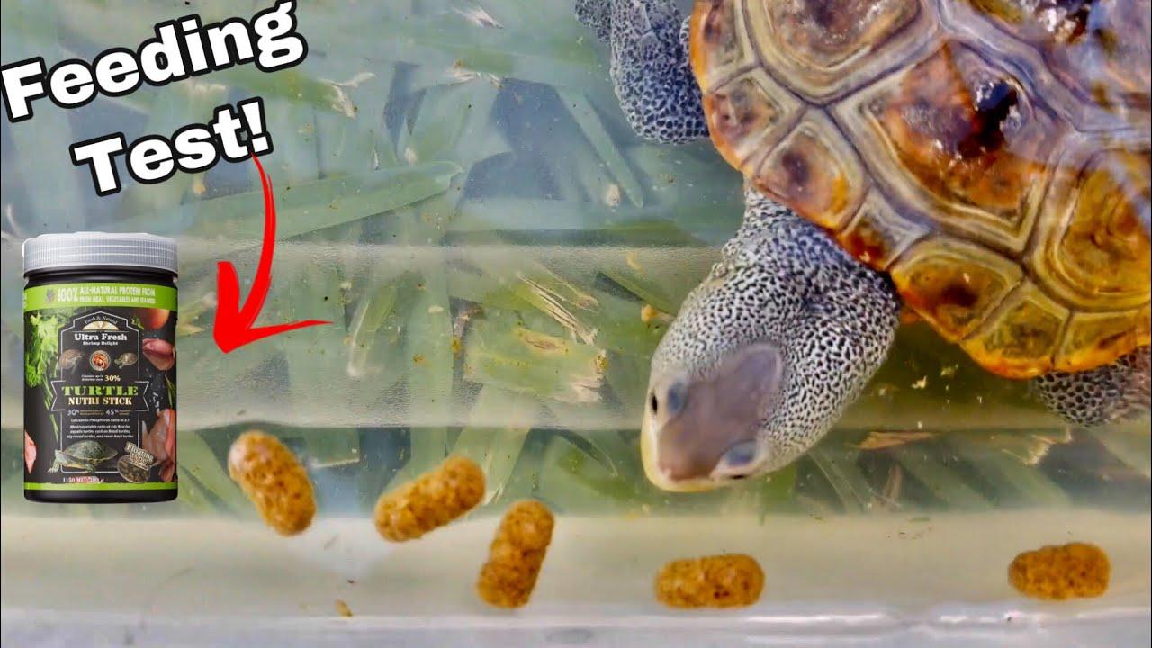 Feeding Test: Oreo vs Ultra Fresh Turtle Sticks