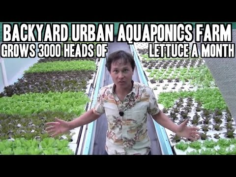 Backyard Urban Aquaponics Farm Grow 3000 Heads of Lettuce a
