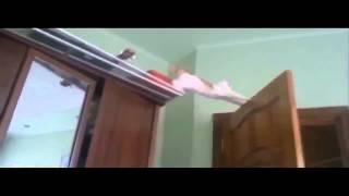 Коты и кошки бывают забавными!
