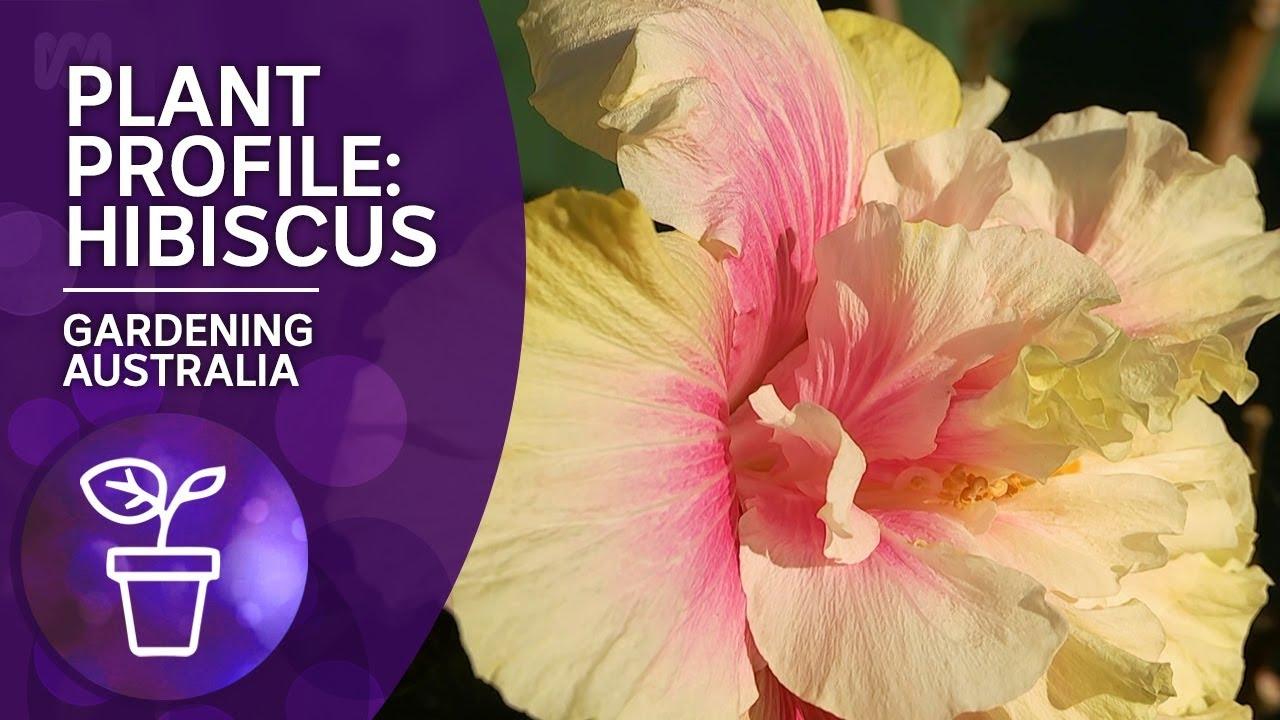 Download Plant Profile: Hibiscus