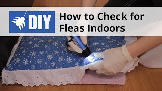 How to Check for Fleas Indoors