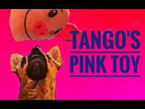 Tango's pink dog toy.  #chihuahua #tangosworld #nosmallcreator