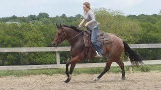 Sassy Zips Tivio - riding in outdoor arena #2 - ValleyViewRanch.net