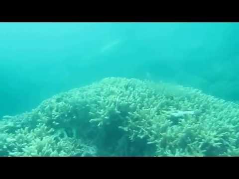 Scuba Diving Site of Malapatan.Sarangani  vid 003