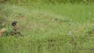 水中の小動物とカモ thumbnail