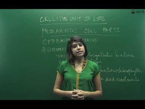 B8.1.3 Cytoplasm of the Prokaryotic cell (Hindi)