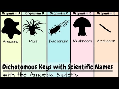 Dichotomous Keys: Identification Achievement Unlocked