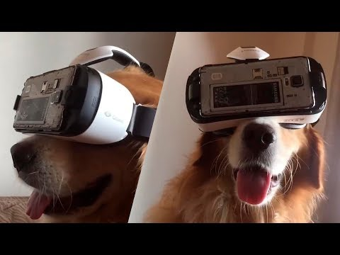 Thumbnail: TRY NOT TO LAUGH or SMILE Watching Funny Animals 🐶 If You Laugh You Lose ★43 (Animal Edition)