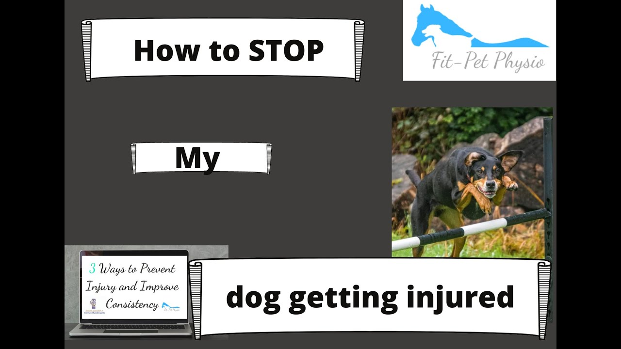 5 Ways to Prevent Injuries in Dogs