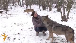 Семья из Белоруссии держит в качестве домашних животных волков