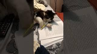 Кот писатель после праздников2
