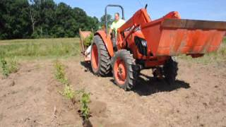 Planting a Large Field with Cranberry  Viburnums