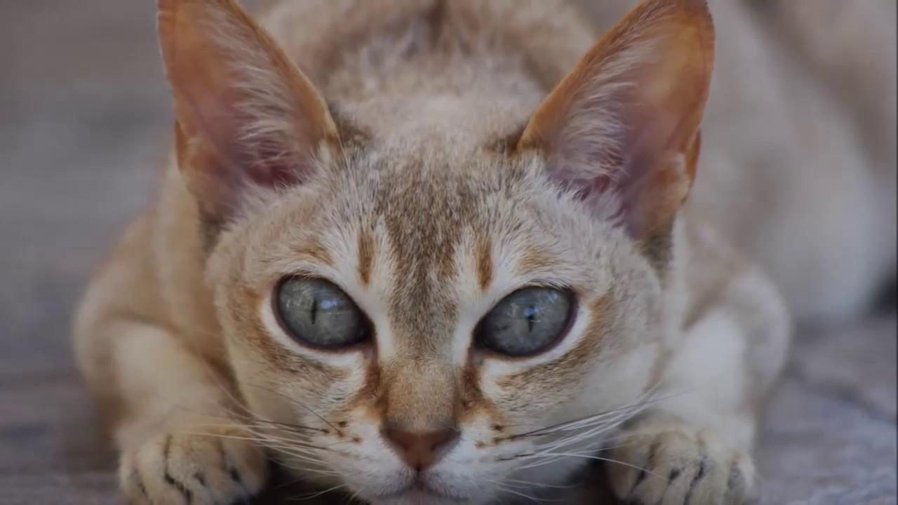 cats with orange eyes