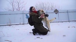 Как живут собаки в приюте «Лучший друг»
