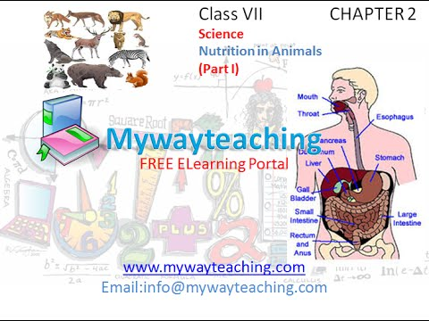 Science Class 7 Chapter 2 Part 1 Nutrition In Animals Youtube