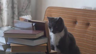Cat watch video on pc, read book and shake the hand of the man
