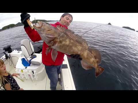 how to clean a lingcod