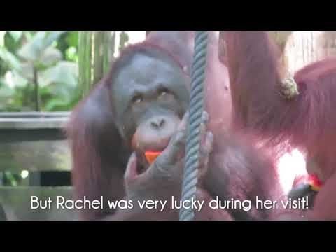 Borneo with Select Travel Holidays