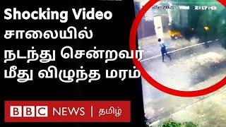 Nivar cyclone CCTV video: மரம் விழுந்து நசுங்கிய முதியவர்   Chennai Rains   Shocking video
