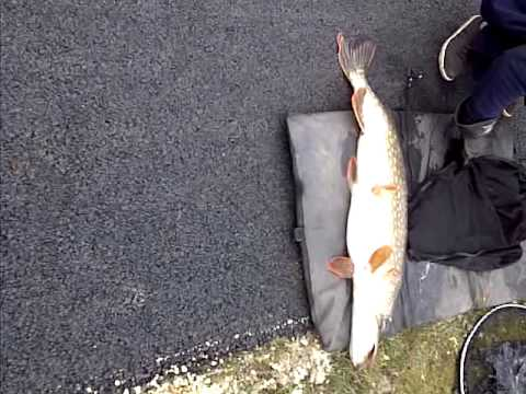18+ Pound Pike Caught On Leeds Liverpool Canal March 2013 By Pphpc