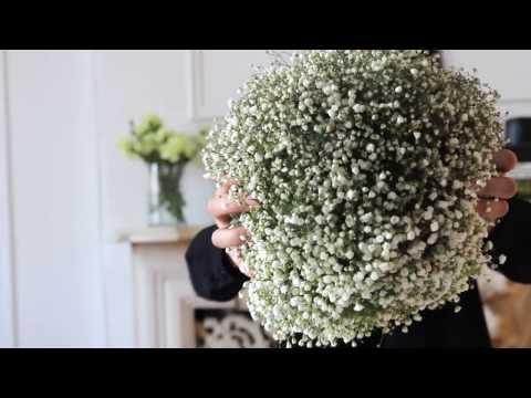 Permalink to Gypsophila Bouquet Youtube