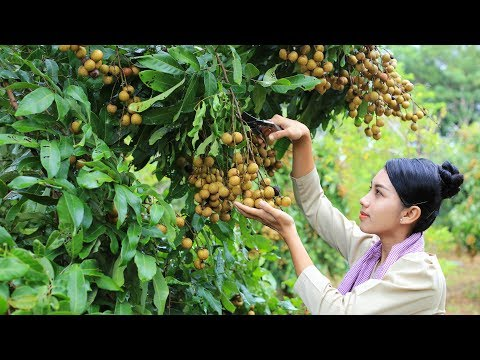 Cooking dessert Longan fruit in my homeland - Poling lifestyle